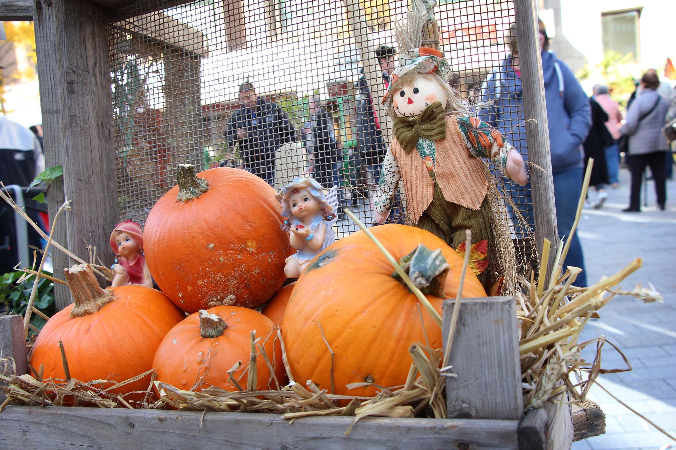 In der Gelsenkirchener City findet am Samstag und Sonntag, 16. und 17. Oktober, ein Bauernmarkt statt. Das erwartet die Besucherinnen und Besucher.